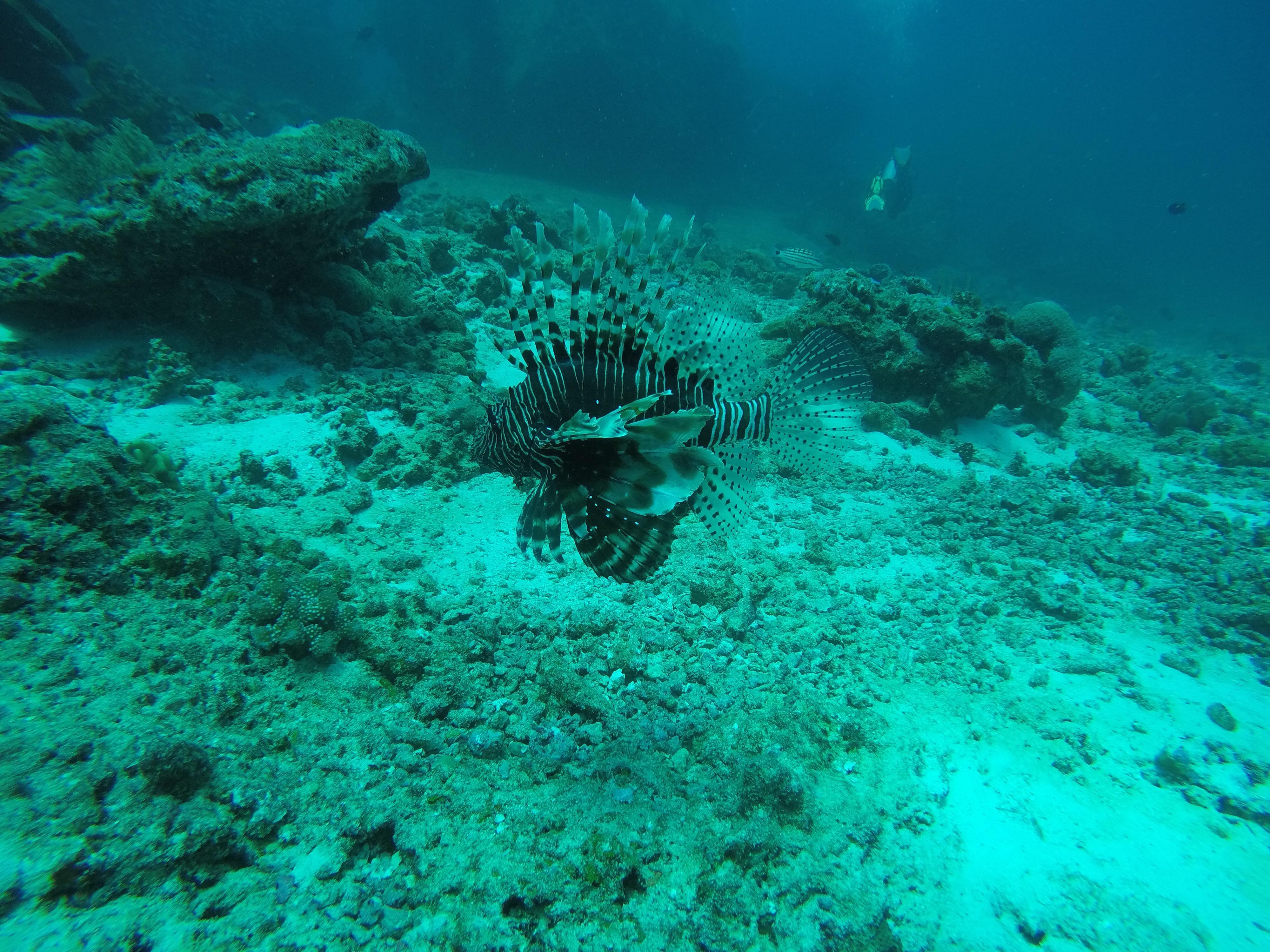 visita_tecnica_subaquatica_parque_marinho_ilhas_similan_peixe_leao