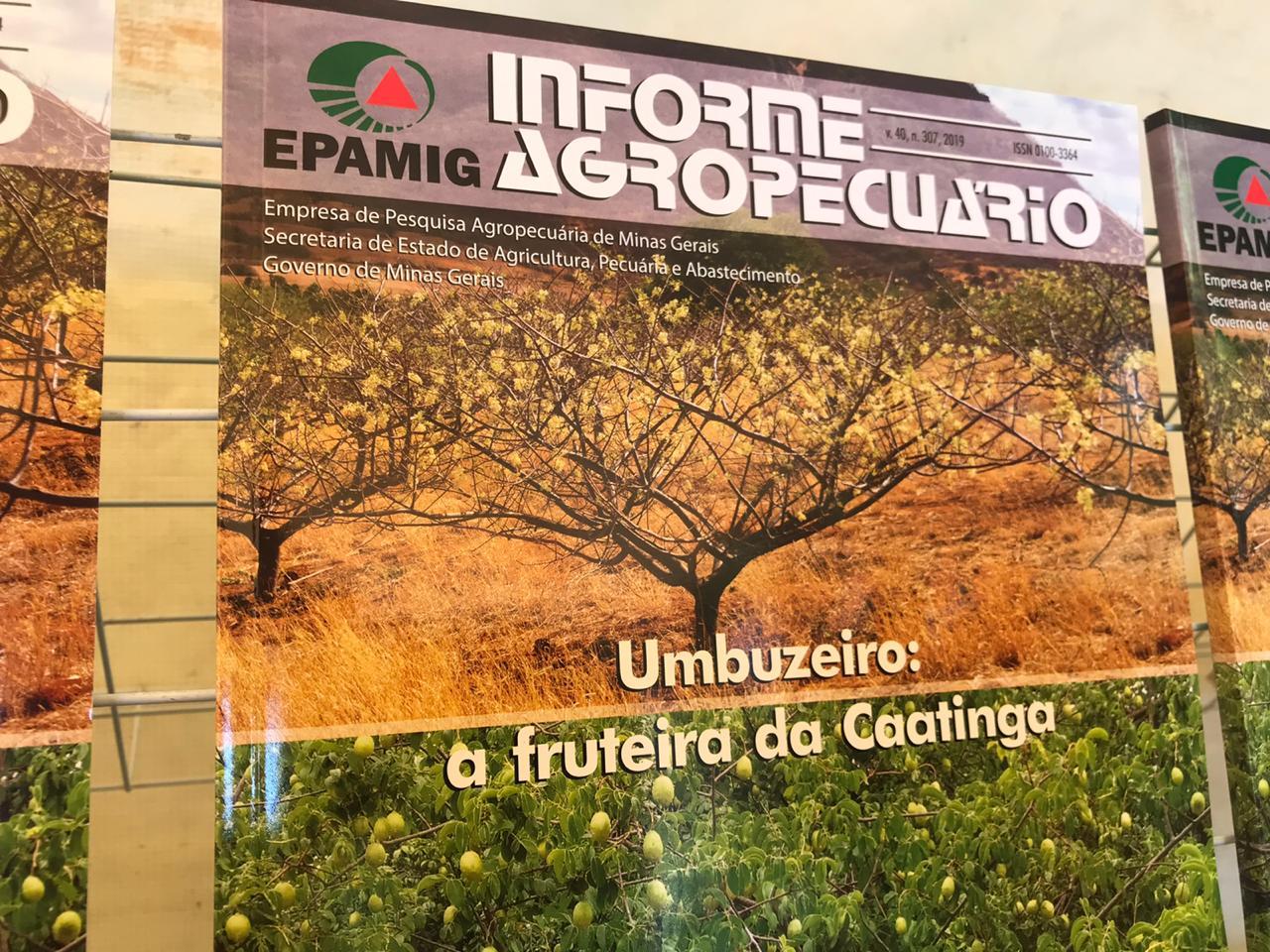 IF Baiano e Epamig lançam informe agropecuário sobre o cultivo do umbuzeiro